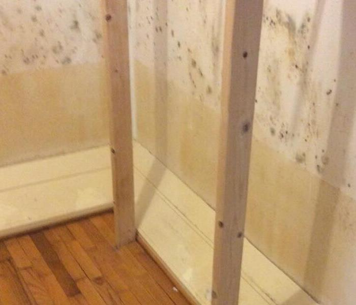 Mold in Master Closet Before